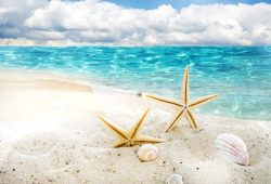 Морская звезда, дизайн #07491