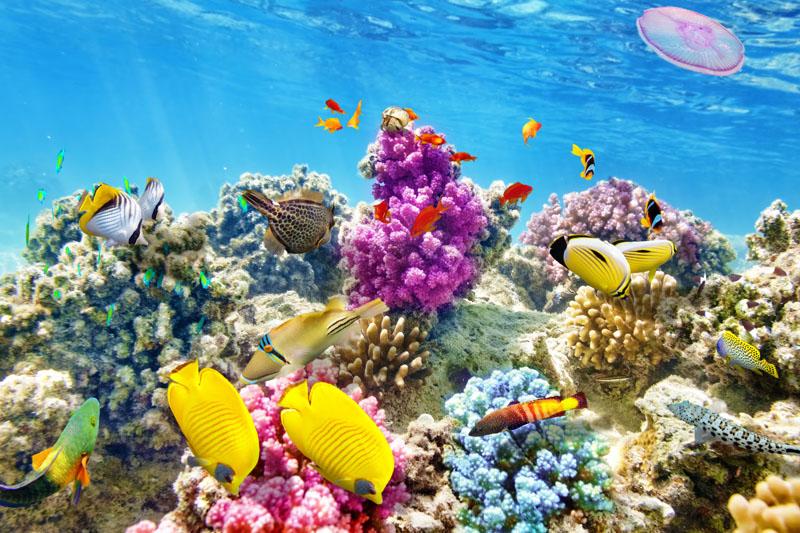 Обои для рабочего стол подводный мир
