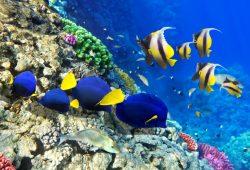 Синие рыбки, дизайн #07495