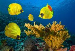 Яркие рыбки, дизайн #07496