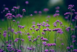 Фиолетовые цветы, дизайн #07578