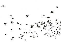 Стая птиц, дизайн #07649