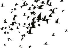 Стая птиц, дизайн #07651