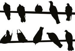 Стая птиц, дизайн #07654