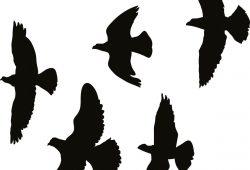 Стая птиц, дизайн #07656