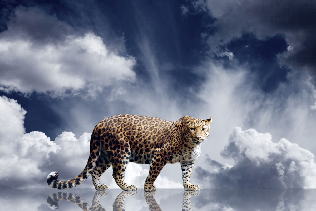 Постеры Тигр, дизайн #07728