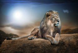 Лев, дизайн #07729