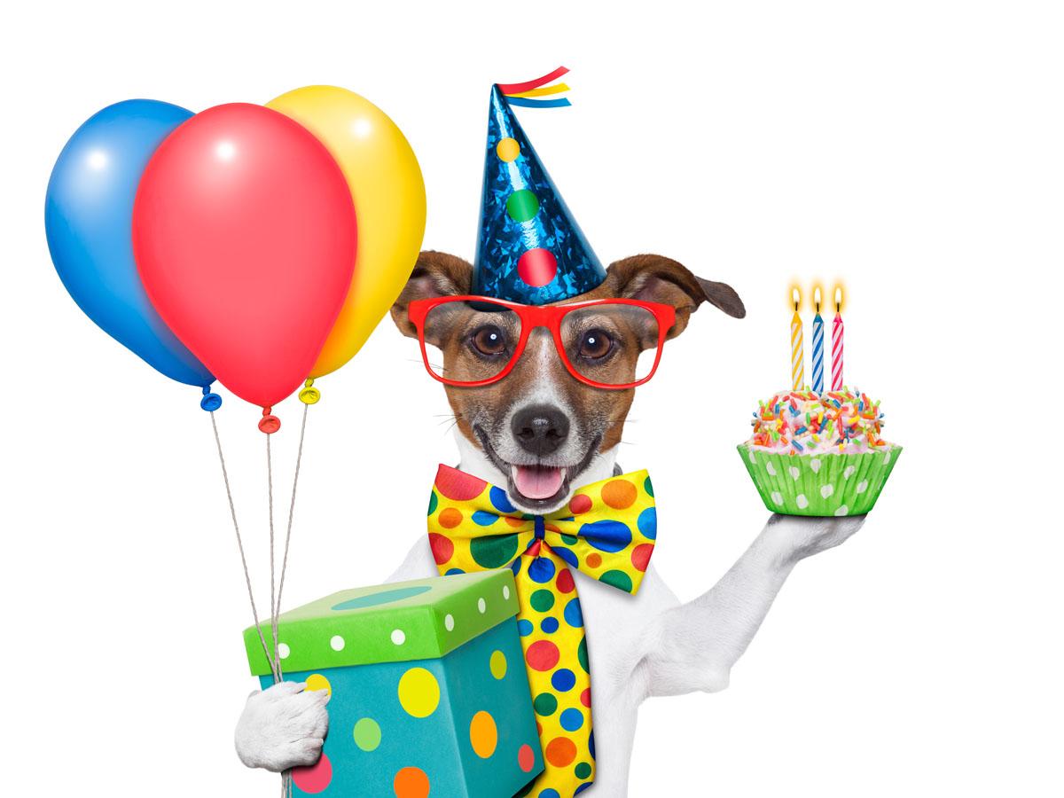Удачного, открытки к дню рождения с собаками