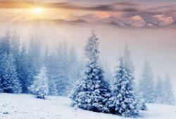 Снежный лес, дизайн #07885