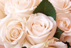 Розы, дизайн #08025