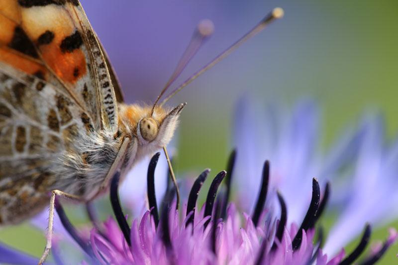 Бабочка на цветке, дизайн #08286