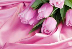 Розовые тюльпаны, дизайн #08315