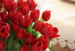 Красные тюльпаны, дизайн #08316