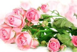 Розы, дизайн #08323
