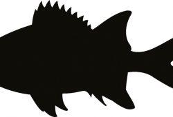 Рыбка, дизайн #08353
