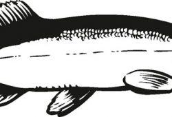 Рыбка, дизайн #08374
