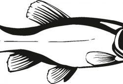 Рыбка, дизайн #08376