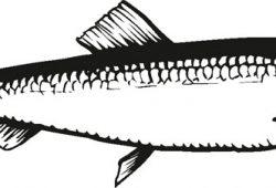 Рыбка, дизайн #08377