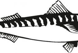 Рыбка, дизайн #08378
