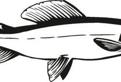 Рыбка, дизайн #08380
