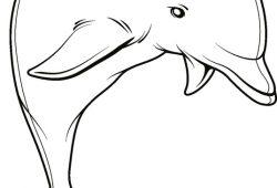 Дельфин, дизайн #08382