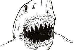 Акула, дизайн #08383
