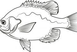 Рыбка, дизайн #08384