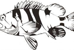 Рыбка, дизайн #08389