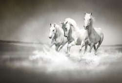 Лошади, дизайн #08587