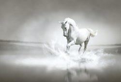 Лошадь, дизайн #08589