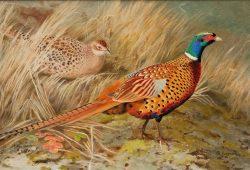 Птички, дизайн #0855917