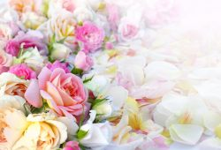 Нежные цветы, дизайн #0859417