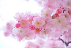 Розовые цветы, дизайн #0859917