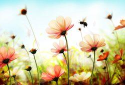 Летние цветы, дизайн #08697