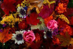 Осенние цветы, дизайн #08698