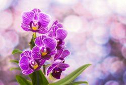 Орхидея, дизайн #08701