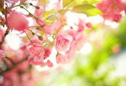 Нежные цветы, дизайн #08702