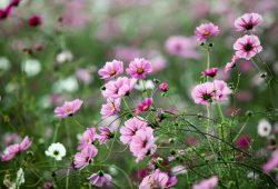Полевые цветы, дизайн #08704