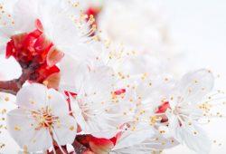 Белые цветы, дизайн #08707