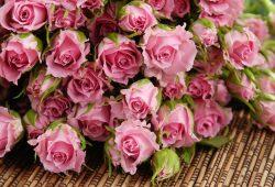 Розы, дизайн #08711