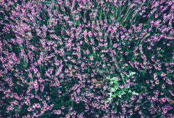 Поле цветов, дизайн #08715