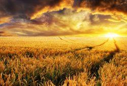 Закат в поле, дизайн #08718