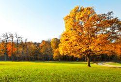 Осень, дизайн #08719