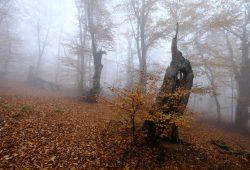 Туманный лес, дизайн #08723
