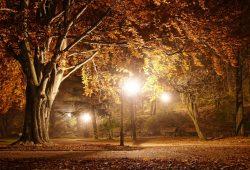 Вечерний парк, дизайн #08727