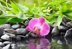 Орхидея, дизайн #08736