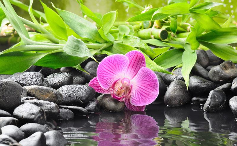 Римские шторы Орхидея, дизайн #08736