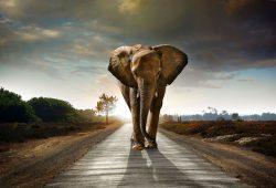 Слон, дизайн #08739