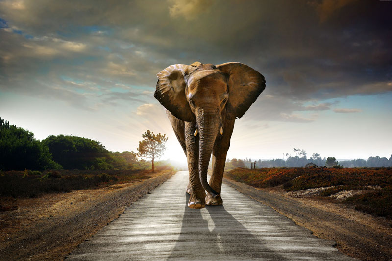 Римские шторы Слон, дизайн #08739