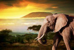 Слон, дизайн #08740